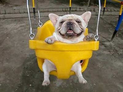 Swinging_Dogs